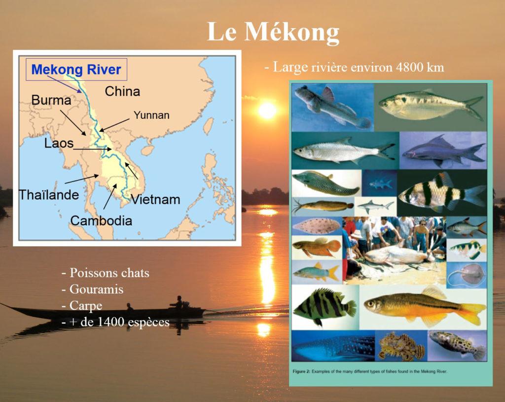 Le fleuve Mékong 1400 espèces