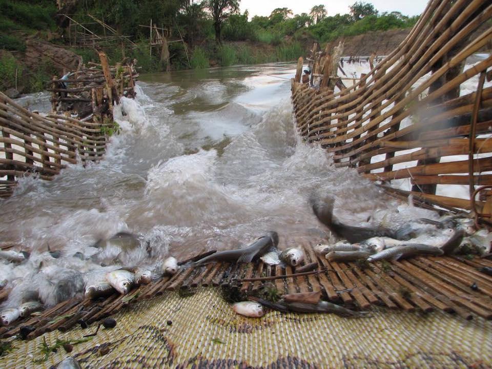 Technique de pêche, capture des poissons Laos
