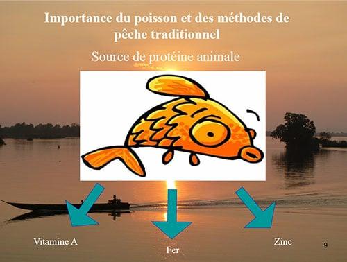 Le poisson source de protéines animales