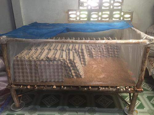 Cage à grillons